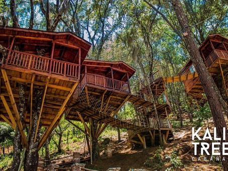 Descansa en un auténtica casa del árbol 🌲❤👏