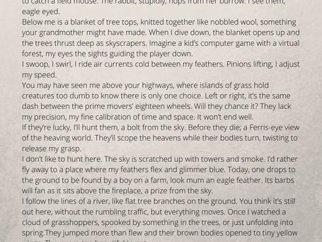 Bird's Eye by Vicki Benn