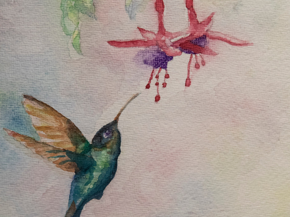 Hummingbird by Ellissa Nolan
