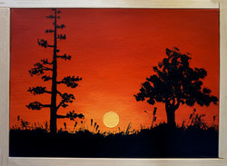 Trees and Sunset