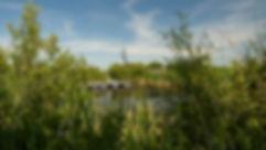 Oak Hammock Marsh - Rockwood.jpg