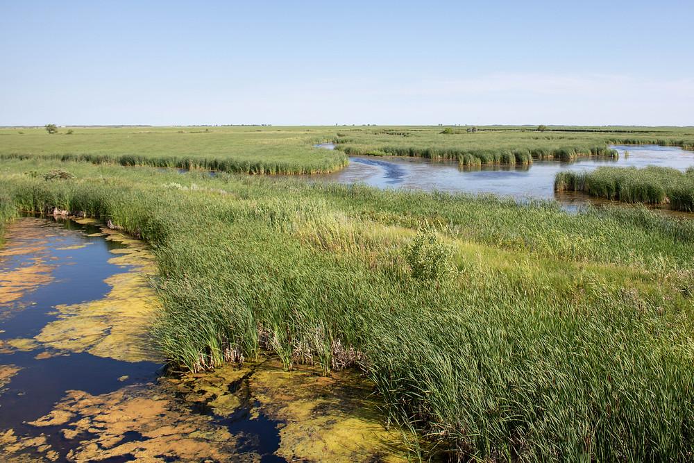 Marsh in Manitoba Canada wetlands Winnipeg Metropolitan Region