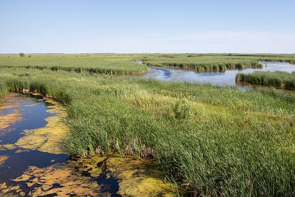 Oak Hammock Marsh-7.jpg