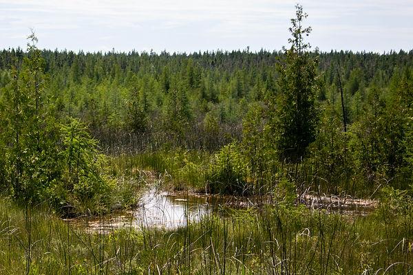 Brokenhead Wetland