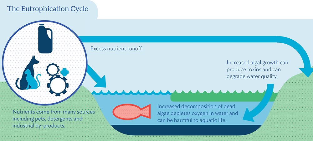 The Eutrophication Cycle