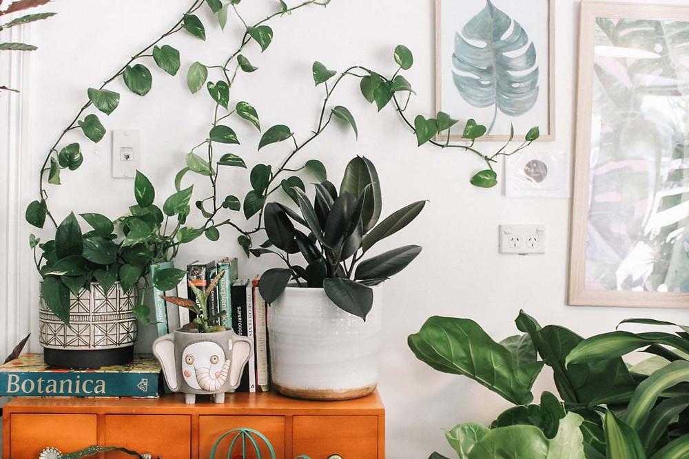 plants on a dresser