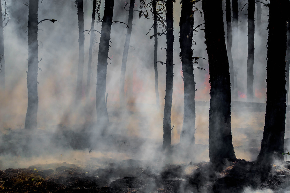 smoke in the forest