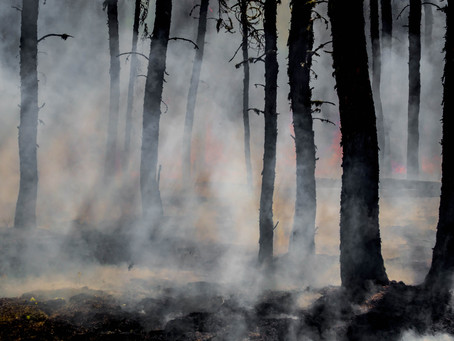 Can wildfires impact our freshwater resources?