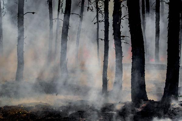 wildfire-smoke.jpg