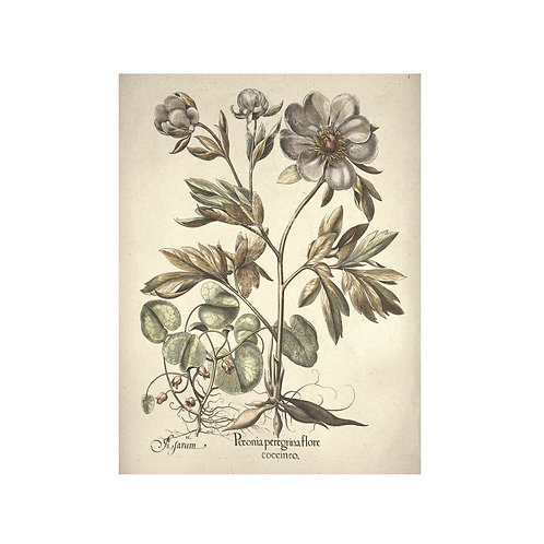 Vintage flora 4