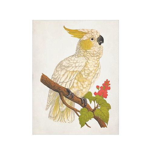 Cockatoo yellow