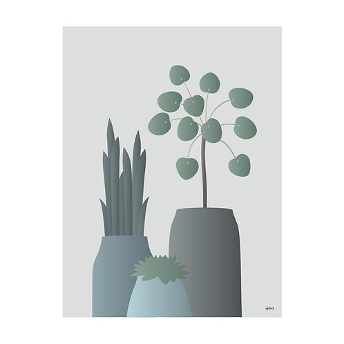Pilea grey