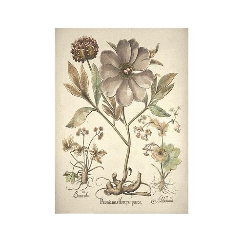 Vintage flora 2
