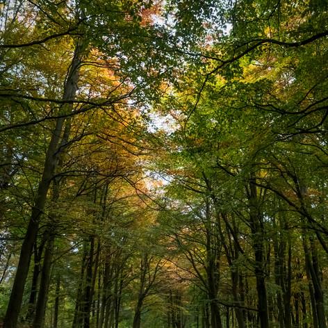 Pitmedden Forest 004