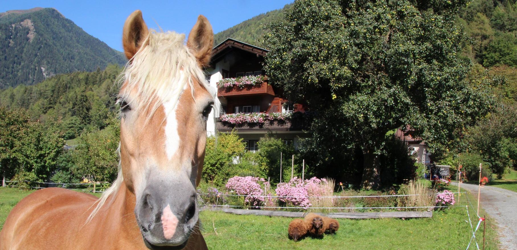 Familienurlaub Kärnten.jpg