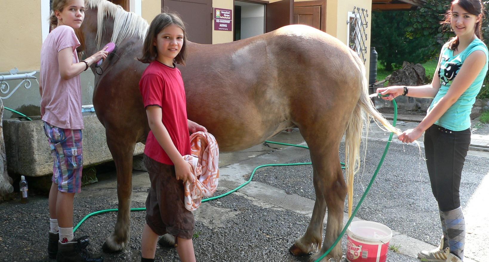 Urlaub mit Pferden.jpg