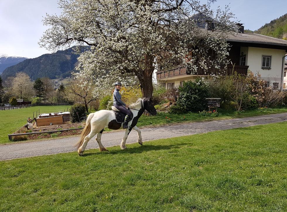 Urlaub am Bauernhof - Reiten.jpg
