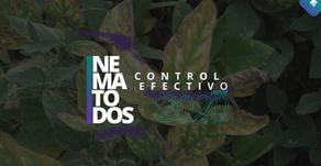 Nematodos y su control efectivo para el 2020
