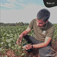 monitoreo de soja en paraguay