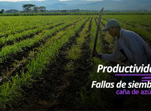 Productividad y fallas de siembra en caña