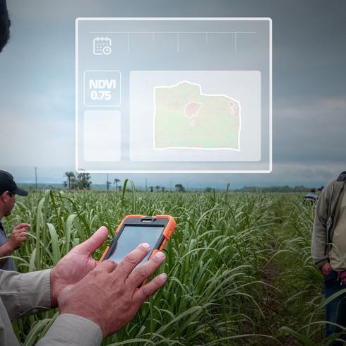 gestión y control agrícola caña imagen satelital NDVI Indice Verde