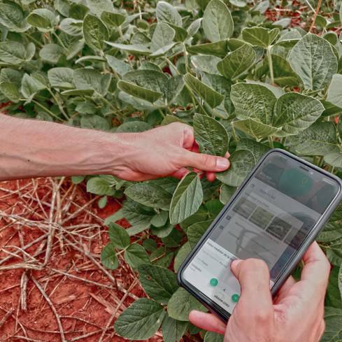 monitoreo digital de plagas en soja paraguay prisma