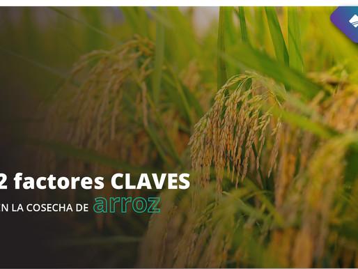 2 factores CLAVES en la cosecha de arroz