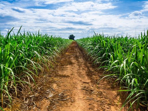 3 motivos para invertir en agricultura de precisión en caña de azúcar