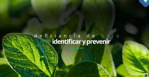 Cómo identificar y prevenir la deficiencia de boro en la soja