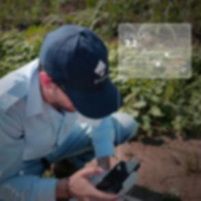 Iphone mirando resultados de fallas de siembra en caña de azúcar con tecnologia de drones
