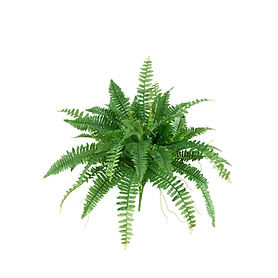 Green Boston Fern Stem