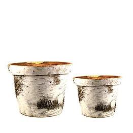 Rimmed Birch Pot