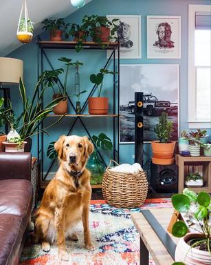 Teddy the studio 🦮.jpg