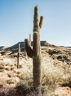 "New Series 🚨 : ""Wild Wild Desert""🌵The"