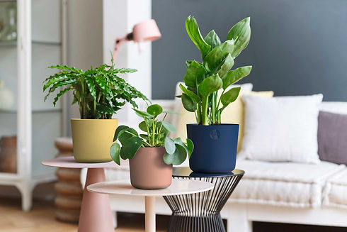 Sebor-interior-planter-2.jpg