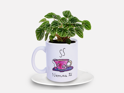Maceta Namas té
