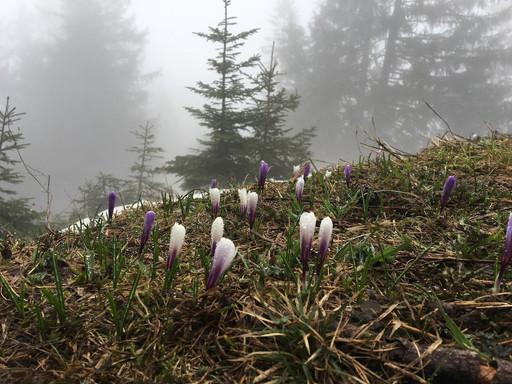 Definitiv Frühling