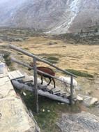 Die Treppe auf den Staudamm