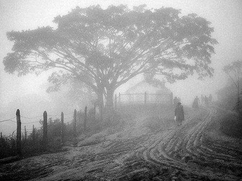 Tarde de névoa