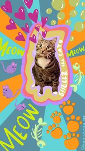 Shellz the Cat