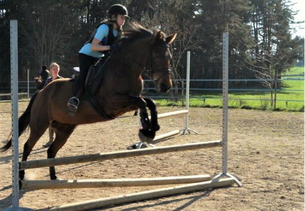 perfectionnement-equitation-cheval-des-hautes-terresjpg.jpg