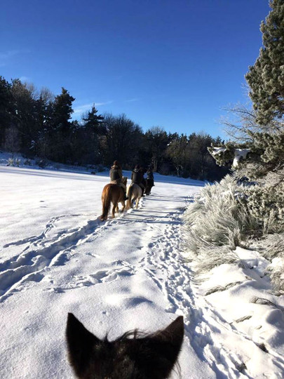 cheval-des-hautes-terres-balade-neigejpg.jpg