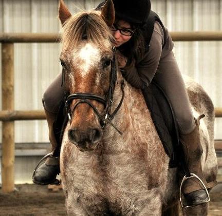 calin-poney-cheval-des-hautes-terresjpg.jpg