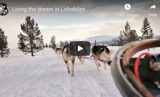Living the dream in Lofsdalen