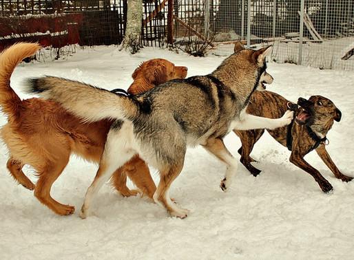Alla hundar har en gräns