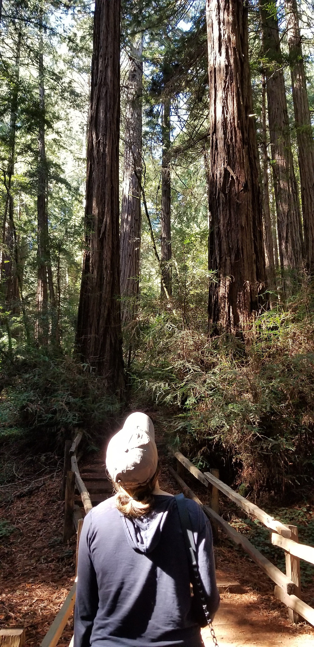 Digital Marketing Trends 2018 and Seeing through the forest