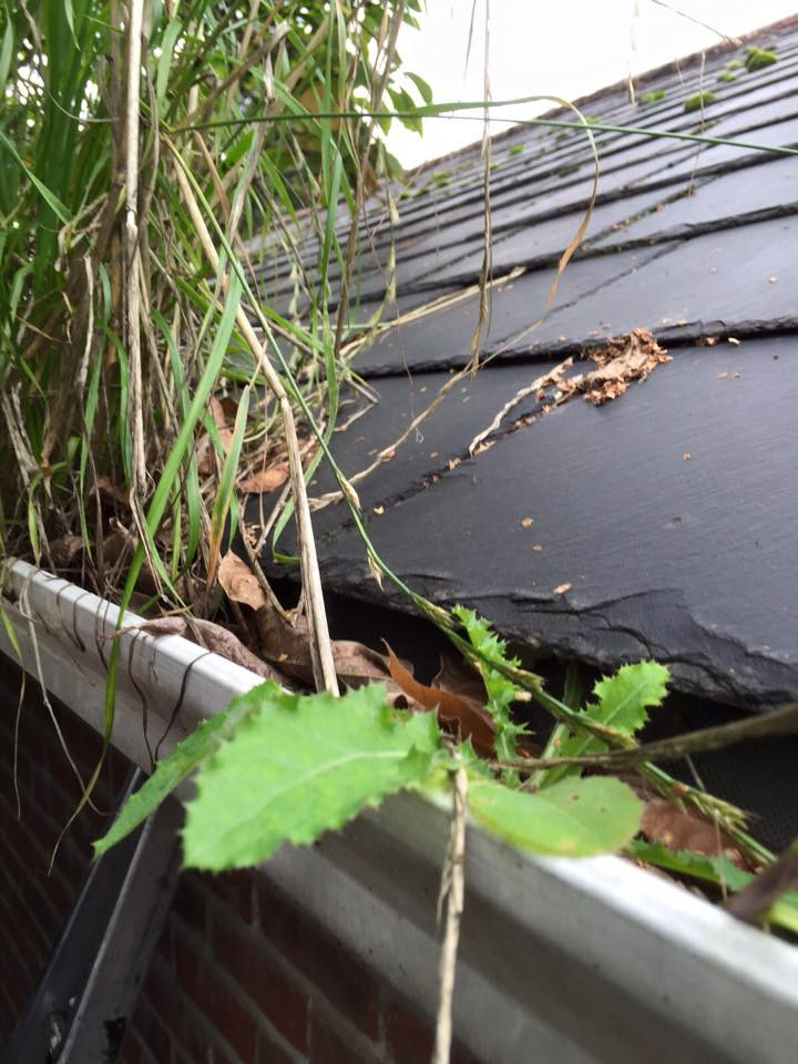 gutter full leaking