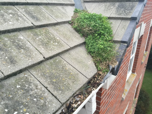 gutter and roof cleaning