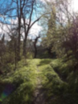 Georgien Georgia nature