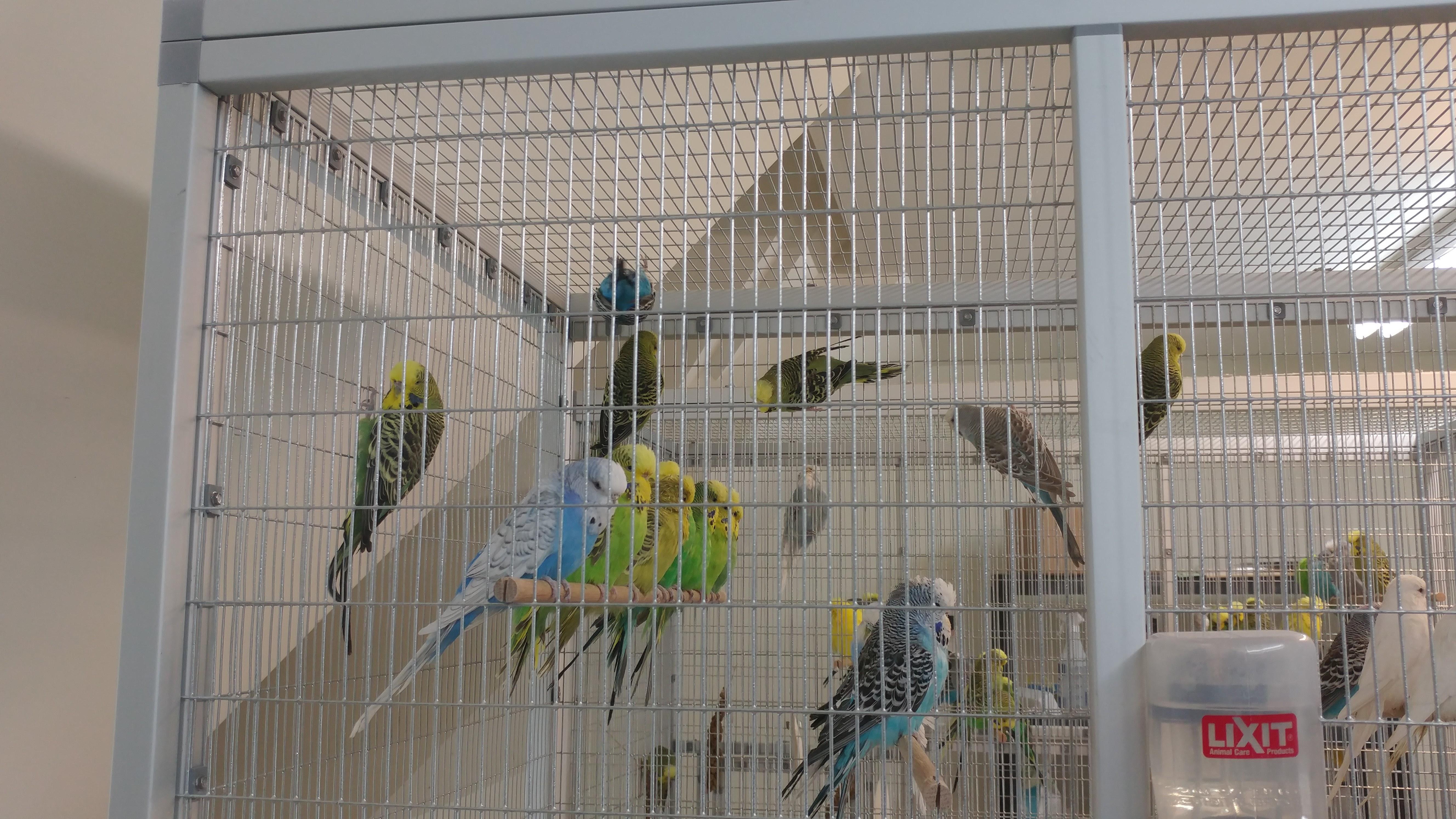 Aviary2